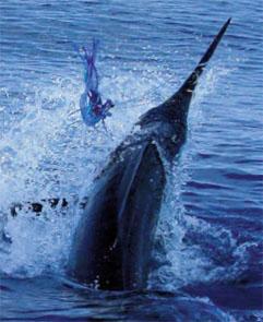 Marlin for Marlin fish recipes